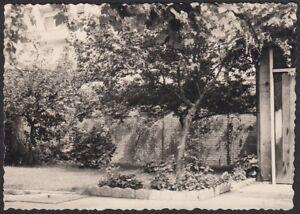 YZ0242 Nel Torinese 1960 - Piante nel giardino di casa - Fotografia d'epoca