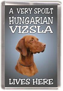 "Hungarian Vizsla Dog Fridge Magnet  ""A VERY SPOILT HUNGARIAN VIZSLA LIVES HERE"""