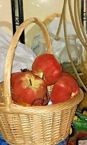 6 Farmhouse Large Fall Primitive Farm Fresh Apples Autumn
