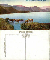 1920's CATTLE STUDY ON DERWENTWATER CUMBRIA COLOUR POSTCARD