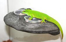 Magnaturals Granite gecko feeder rock ledge gecko bearded dragon frog