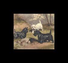 - Scottie Cairn Westie Dog Print - Megargee CLEARANCE