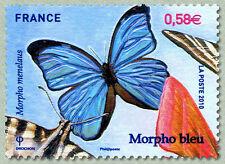 france ca 2010 papillons butterfly mariposa morpho blue Schmetterlinge farfalle