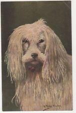 Dogs, A. Muller Art Postcard #2, B585