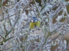 Wildlife Hospital Charity Christmas Xmas Cards Winter Blue Tit  – pack of 10 New