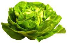 60 Graines de Laitue Merveille d'été Méthode BIO plante salade légumes potager