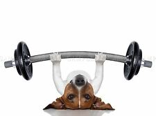 JACK RUSSELL DOG PERSONAL TRAINER WEIGHT LIFTER PHOTO ART PRINT POSTER BMP2043A