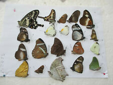 Entomologie Lot de Papillons du Cameroun 20 piéces diverses -  lire l'annonce