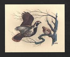 *Vintage* 1970's FREDERICK SWENEY Wildlife 3-D EMBOSSED Print QUAIL BIRD NOS