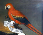 """high quality oil painting 100% handpainted on canvas """"A Parrot"""""""