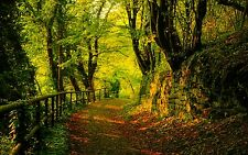 AUTUMN TREES FOREST PATH LANDSCAPE NATURE WALL ART CANVAS PICTURE PRINT 20X30""