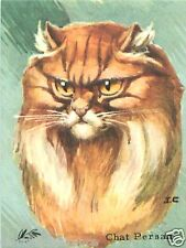 CARD BON POINT : CHAT PERSAN Persian Cat  60s