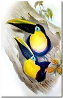"""Vintage John Gould Bird Art CANVAS PRINT~ Toucan 16""""X12"""""""
