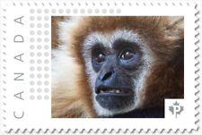 GIBBON MONKEY = postage stamp MNH Canada 2018 [p18-09-01]