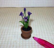 Miniature PURPLE Iris Potted in Aged Terra Cotta Pot, DOLLHOUSE Spring 1:12