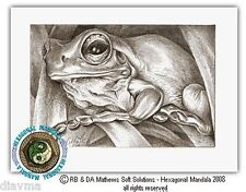 © ART - Green Tree Frog drawing Australian Animal Nature - by Di