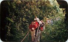 Hawaii National Park~Thurston Lava Tube~Folks on Rope Bridge~1957 Postcard