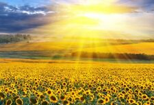 6x4FT Sunflower Manor Sunshine Photography Backdrop Vinyl Background Studio