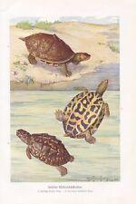 1:12 Porzellan Service Schildkröte neu sehr schön