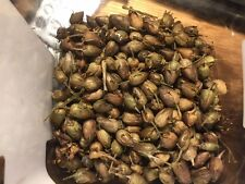 2000 Izmir (Turkish) Tobacco Seeds. 2016 Harvest.