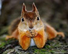 Squirrels / Squirrel 8 x 10 / 8x10 GLOSSY Photo Picture Image #21