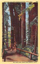 California postcard Path thru grove natural graft tree Big Trees Park Santa Cruz