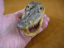"""G-Def-251) 4-1/8"""" Deformed Gator ALLIGATOR HEAD jaw teeth TAXIDERMY weird gators"""