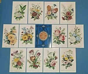 Beautiful Set of 12 NEW Art Postcards, The Language of Flowers by Robert Tyas