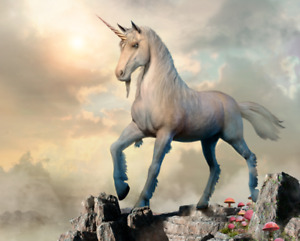 Unicorn Fragrance Oil for Candles Soap Diffuser Bath Bombs Scented Wax Melts
