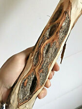 """62"""" Diamond Willow Walking Stick (Wow~Spalted 40+💎s) Wood Carving blank, Staff"""