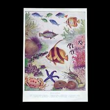 VINTAGE c1930s Australian colour print of THE CORAL POOL - after Ethel A. King