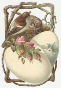 Songbird Bird Nest & Eggs Kidd's Cough Syrup Household Victorian Trade Card