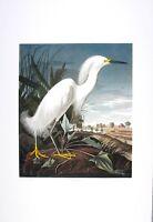 Audubon  - Ltd. Ed. Loates Snowy Egret Print Signed