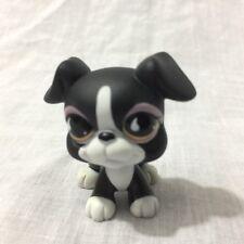 Littlest Pet Shop LPS #826 Black & White Boxer Dog Raindrop Eyes