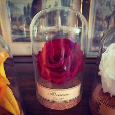 Globe fleur Rose Rosaceae stabilisée / Cabinet de curiosités / Naturalisme