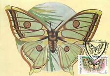 Graellsia isabellae  butterfly Postcard