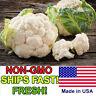 400+ Heirloom Cauliflower Seeds | Non-GMO | Fresh Vegetable Garden Seeds