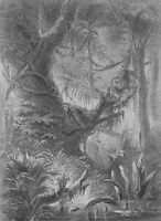 BRAZIL Scenery in Primeval Forest Jungle - 1880s G. Roux Antique Print Engraving