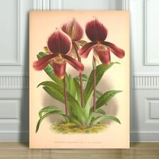 """JEAN LINDEN - Beautiful Purple Orchid #44 - CANVAS PRINT POSTER - 10x8"""""""