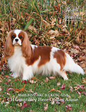 Royal Spaniels Magazine Book - Collectible - Cavalier King Charles Spaniel