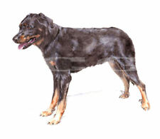 BEAUCERON.     3 Blank Dog greeting cards by Christine Groves