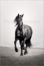 Pferd Stall Tür Tor Pferdekopf Rappe braun Wallario XXL Poster 80 x 200 cm