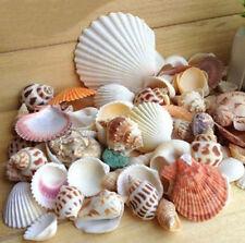 Mixed Shells Shells/Coral/Starfish Collectable Shells