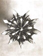 1942 FOTO ORIGINALE STAMPA ROTOCALCO PIASTRA 16. Karl Blossfeldt astratto botanico