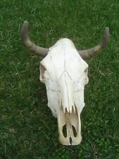 "Bull / Steer / Skull & Horns Large Wall Mount 21"" X 17"""
