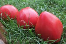 10 graines de tomate très rare Grand mère du Taureau excellente heirloom tomato