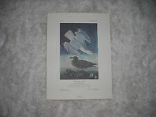 Birds of America Print Herring Gull 1986 74/500 by John J. Audubon F,R,S, F,L,S,