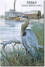 Great Blue Heron by Tom Freeman - Chesapeake Bay Collection Art - Wildlife Art