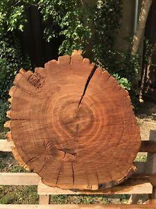 Baumscheibe EICHE Trocken XXL 54/46/7cm Holzscheibe Couchtisch Tischplatte Deko