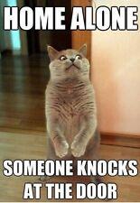 "Funny Cat  refrigerator magnet 2 1/2x 3 """